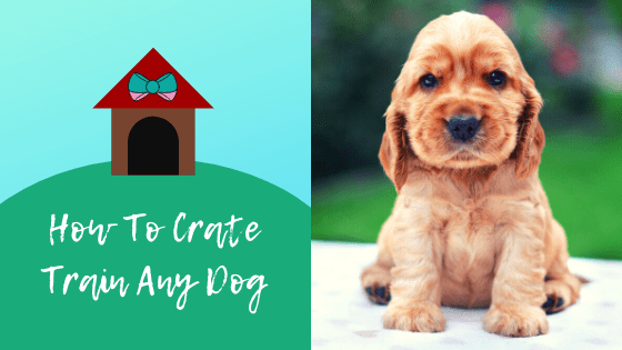 How To Crate Train Any Dog