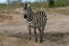 Photography from Africa