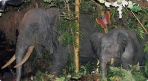 Elephants in the Rainforest Cafe