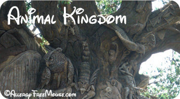 Dining with a food allergy at Animal Kingdom restaurants