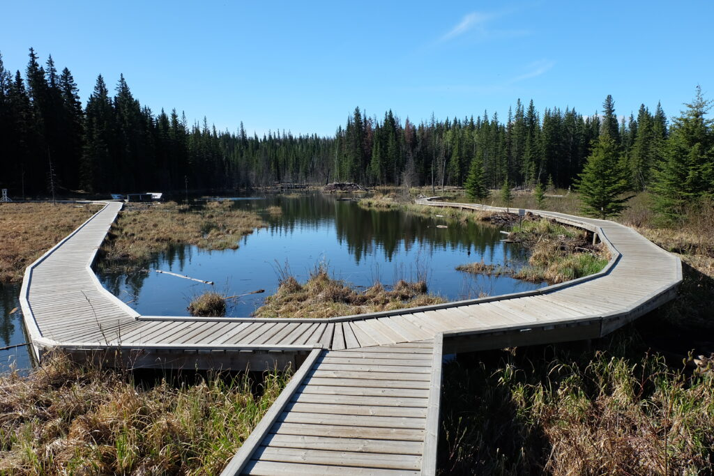 beaver boardwalk