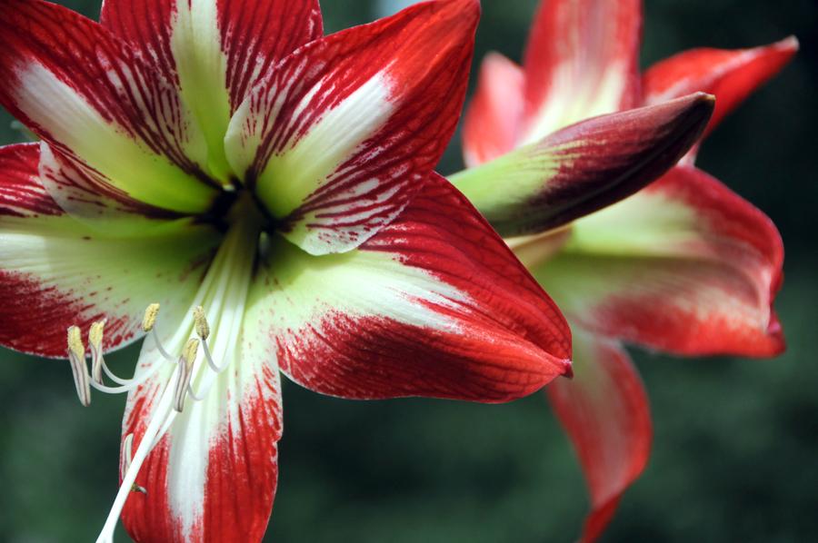 frist-bloom