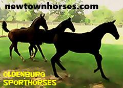 Newtown Horses - Oldenburg Sporthorses