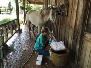 lsu horse rescue feature pic