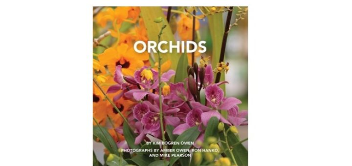Feature IMage - Orchids