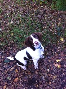 Tracy Baines dog Harry