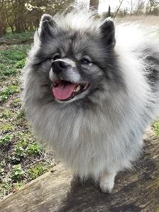 Tom Lloyd dog