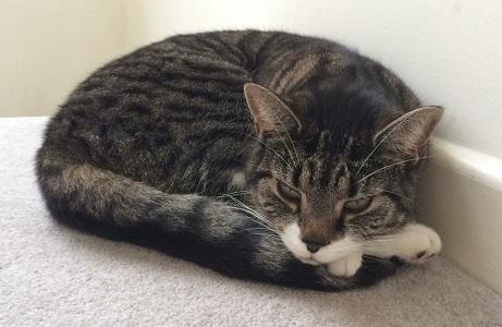 Alex Day Cat