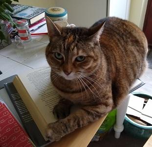Karen Moore Cat Lexi