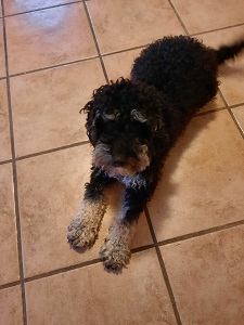 Leonie Mack Dog