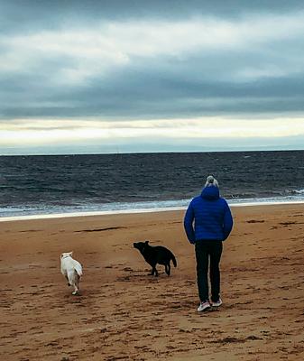 Dan Scottow dogs