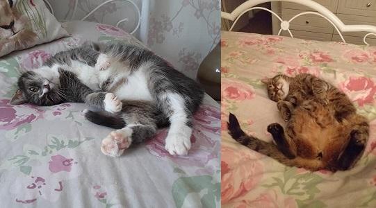 Keri Beevis Cats