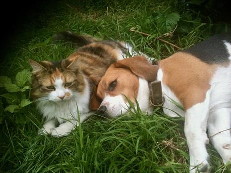 Gareth Southwell pets