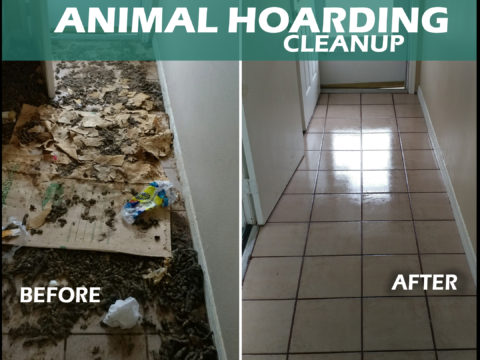 Animal Hoarding Cleanup