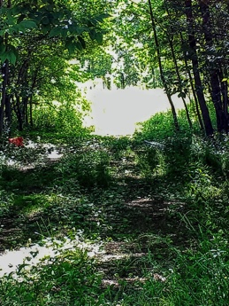 25 ACRES WOODED & OPEN MEADOWS