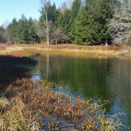 VERY PRIVATE!  PONDS, STREAM...GREAT FOR HUNTING!  207 ACRES
