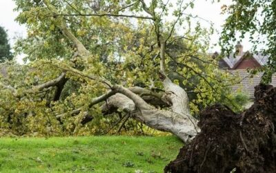Responsibility for Tree Branches and Roots