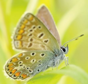 butterflies-95358 a