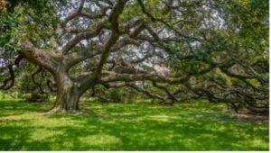 Spiritual Growth and Psychic Development Drop-in Workshop (Lisa Katheyrine Howard) @ Online via Zoom