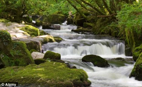 trust like a river flowing over rocks