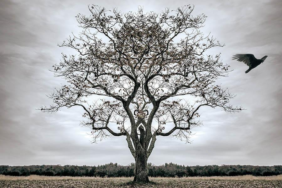 its a journey grey wind raven