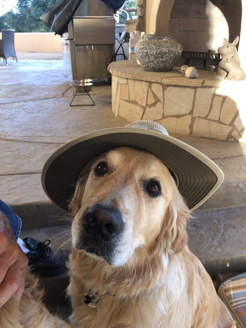 Dog with hat on