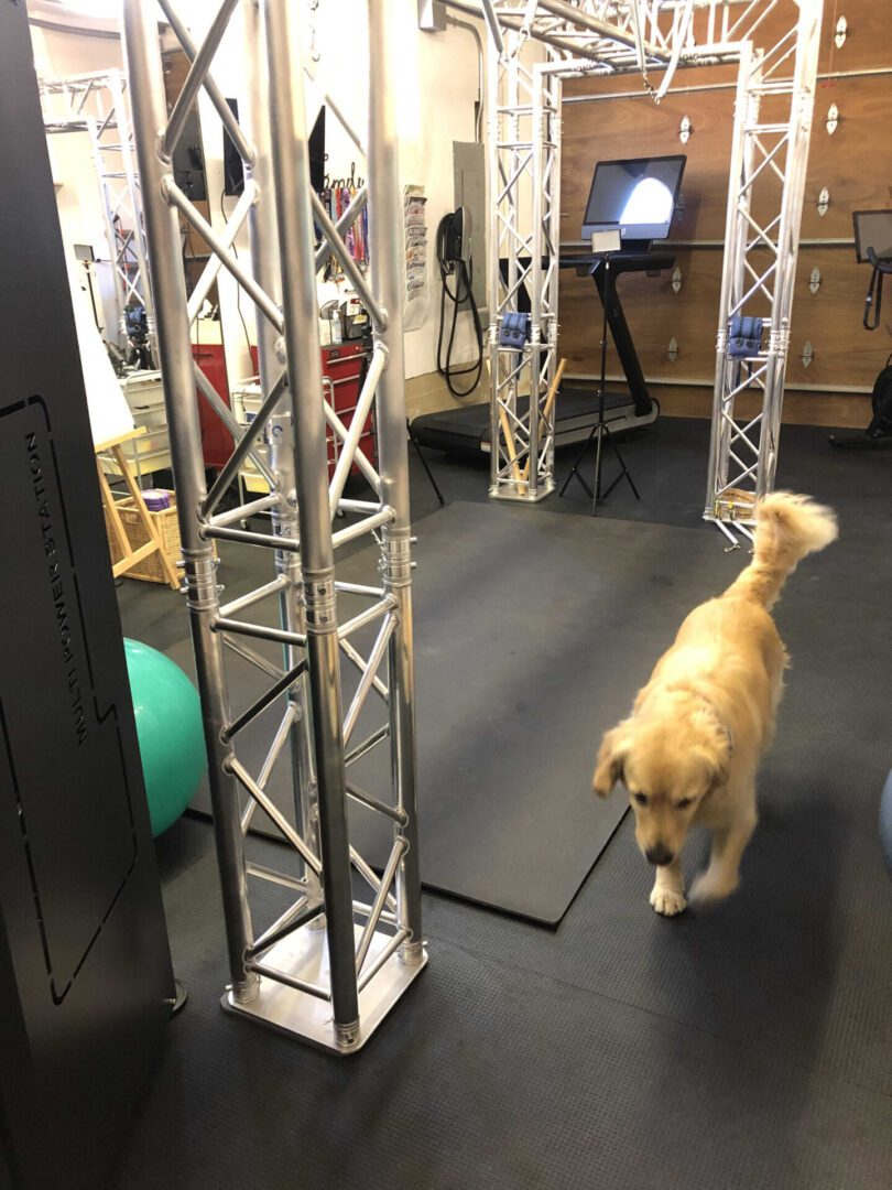 Picture in my gym. FitSpring exercise equipment, tredmill and dog
