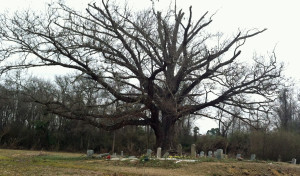 grave tree 4