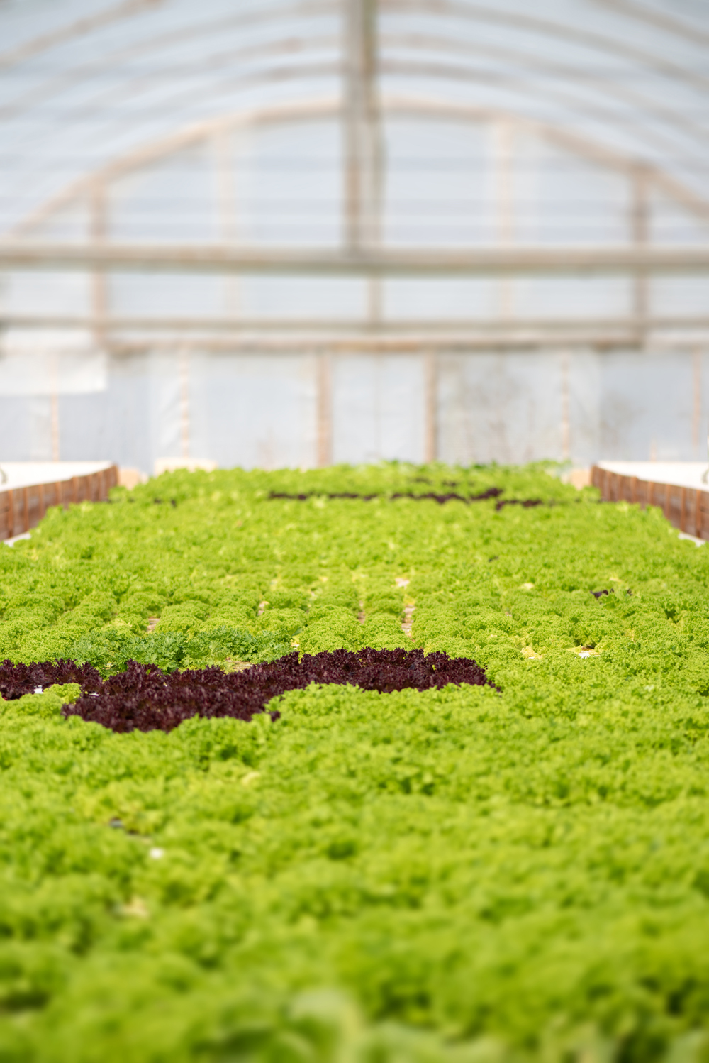 organic-hydroponic-vegetable-cultivation-farm-compressed