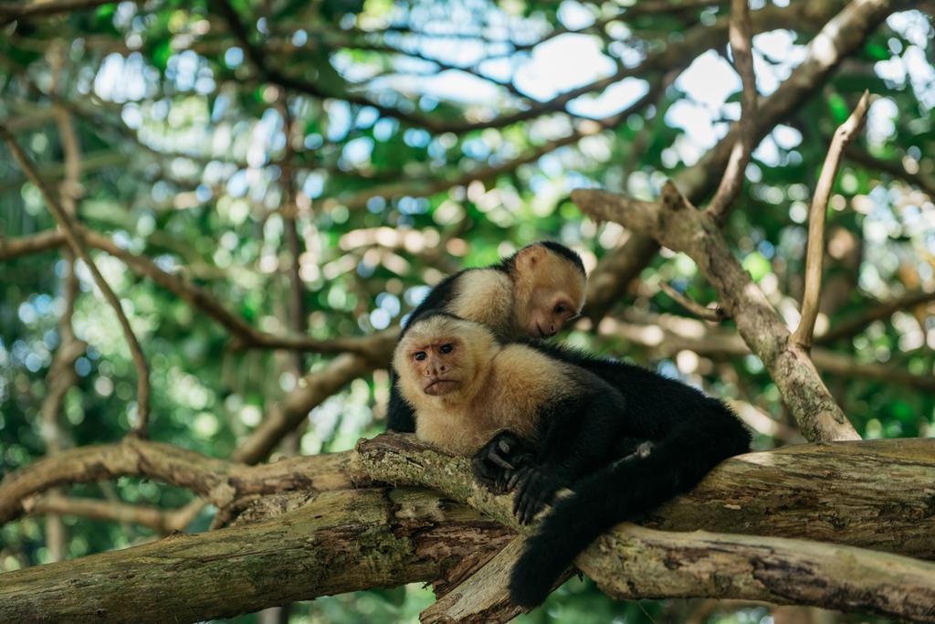 Igloo-beach-Monkey