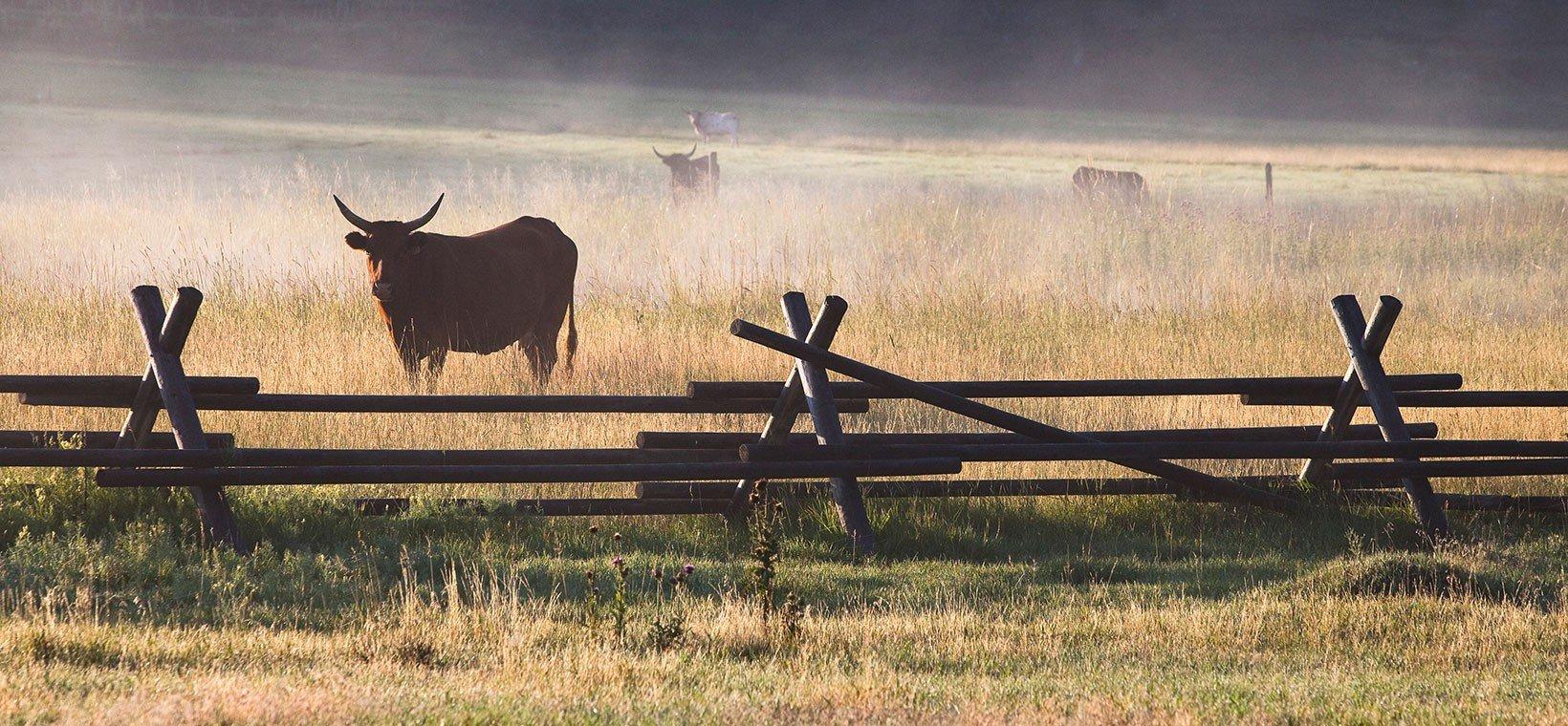 Longhorn_jackleg_fence-1640x760-1640x760