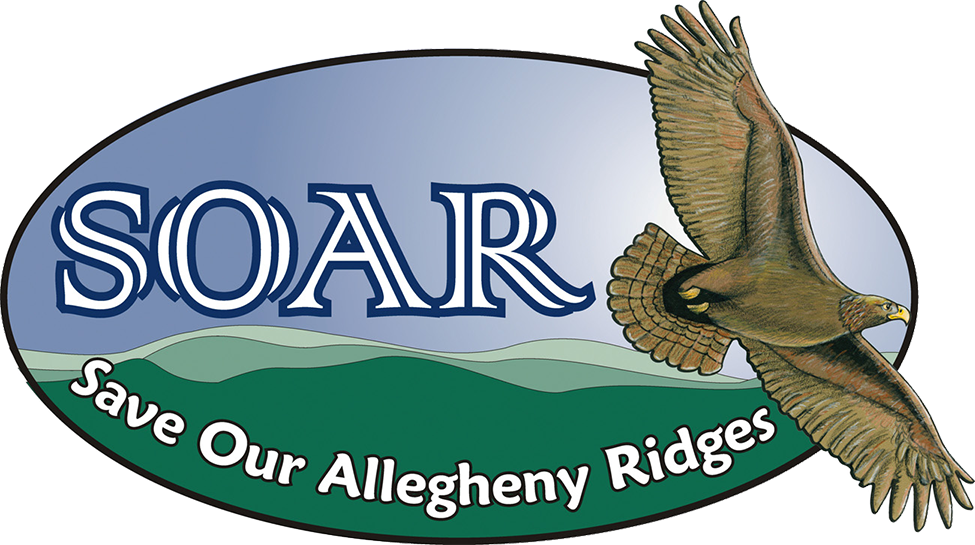 1_SOAR Logo Web_TRANSPARENTBKDGRD copy