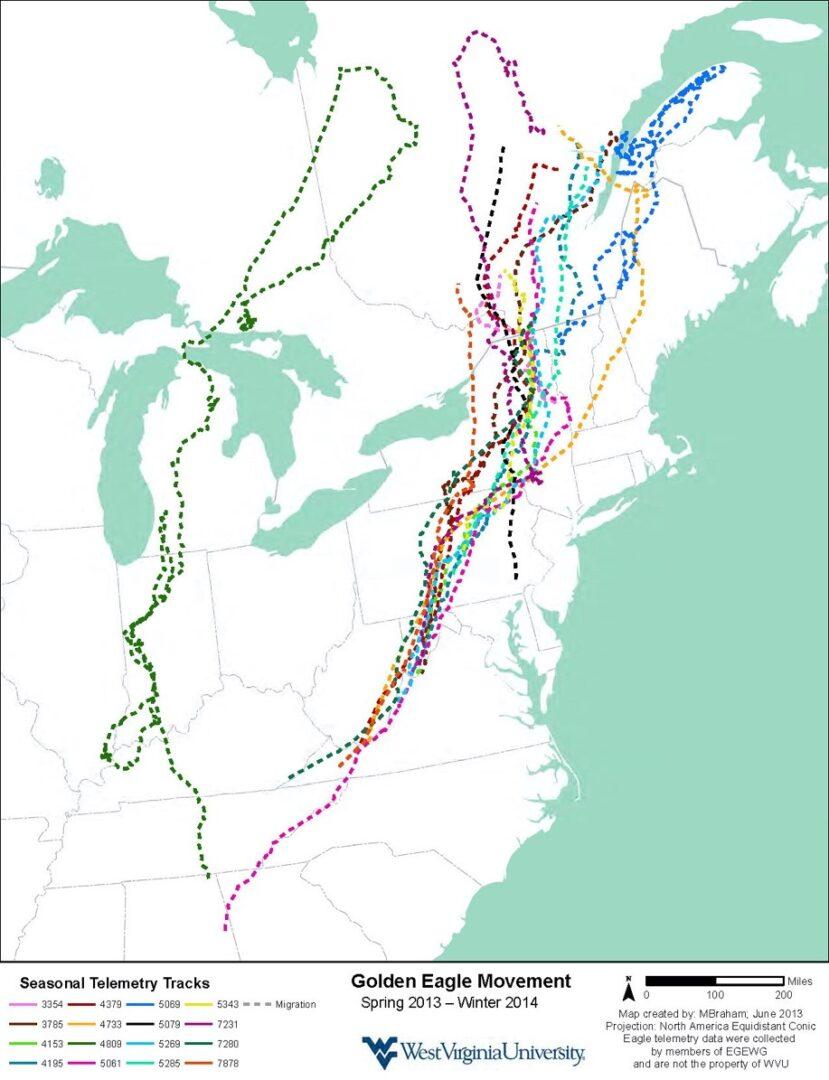 golden eagle map