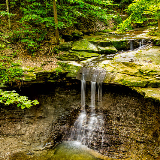 Forests perform many ecological functions.  The more forest cover in the watershed, the higher the quality of water.