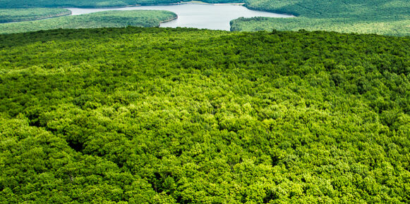 The long expanse of forests in the Wild Creek Watershed, located in Penn Forest Township, are under threat from wind development.   Bethlehem Authority, which leased these forested mountains to Atlantic Wind, should protect the watershed from energy development to maintain the high quality of water used by thousands of people and businesses in Bethlehem.