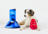 Dog with PupPod Wobbler and Pet Tutor tower
