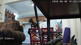 Using pet camera to spy on dog causing mayhem