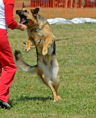 how to stop a dog from jumping