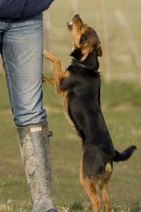 how to stop dog from jumping on people