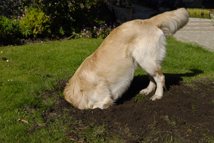 how to stop a dog from digging holes