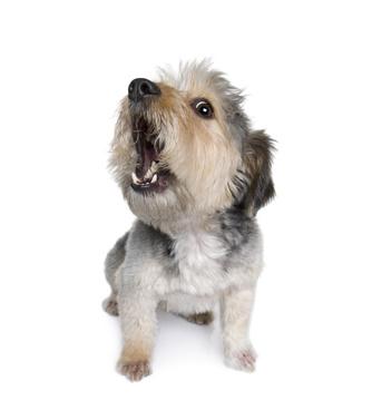 dog barking control
