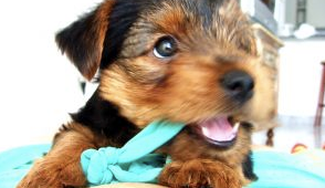 dog chewing problems