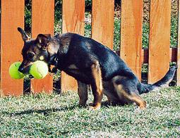 housebreaking an older dog