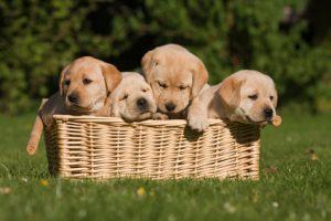 puppy training advice