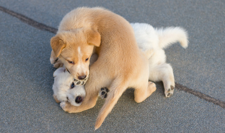 stop puppy from biting