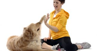 tips on dog training