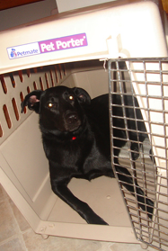 what is crate training