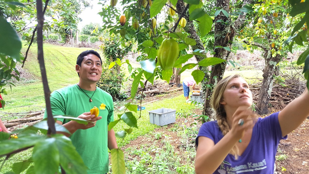 fb-master-gardener-coordinator-joshua-silva-and-village-harvest-americorps-vista-tuula-perry-lead-master-gardeners-in-a-harvesting-activity-after-a-pruning-workshop