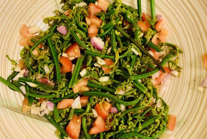 fern-shoot-salad