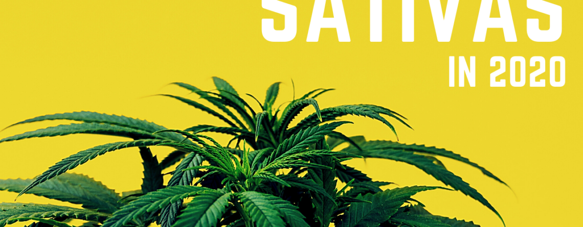 2020 marijuana sativa strains